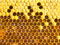 Cocoons bee nectar honey and pollen in cells are the larvae of the future of bees Royalty Free Stock Photography