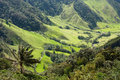 Cocora Valley, Natural Park of Colombia Royalty Free Stock Image