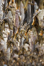 Cod stockfish Royalty Free Stock Photos