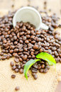Cofee beans with white cup and green leaves Royalty Free Stock Photo