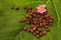 Coffe beans and a green leaf Royalty Free Stock Image