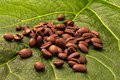 Coffe coffee beans on green leaf Stock Photos
