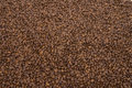 Coffee bean background image of hundreds of beans Royalty Free Stock Images