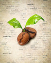 Coffee Bean And Leaf Collage Stock Images