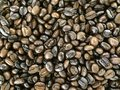 Coffee bean Royalty Free Stock Photo