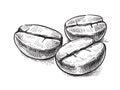 Coffee bean symbol vector