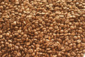 Coffee beans background with many Royalty Free Stock Photo