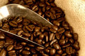 Coffee beans in burlap sack with silver scoop Stock Photography