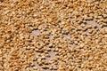 Coffee Beans Dried Under Sun I...