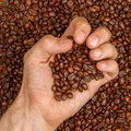 Coffee beans in hand Royalty Free Stock Photo
