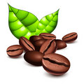 Coffee beans and leaves Stock Images