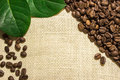 Coffee beans lying on the sacking Royalty Free Stock Photo