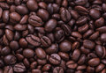 Coffee beans roasted can make a beverage Stock Images