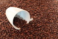 Coffee beans rostet and cup Stock Photo