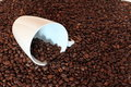 Coffee beans rostet and cup Royalty Free Stock Photo