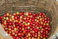 Coffee berries red in bamboo basket Royalty Free Stock Photography