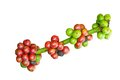 Coffee berry isolate tree with ripe berries Stock Photo