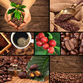 Coffee collage with beans cherries weight and other Stock Image
