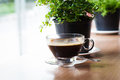 Coffee cup with house plant Royalty Free Stock Photo