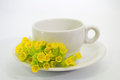Coffee cup with Primula veris flower Royalty Free Stock Photo