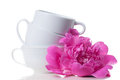 Coffee cups and pink peony three different empty white are stacked flower Royalty Free Stock Image