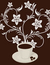 Coffee flower Stock Images