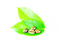 Coffee and leaf grain isolated on background Royalty Free Stock Photography