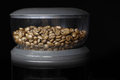 Coffee a multitude of similar shaped and sized beans in a grinder Royalty Free Stock Image