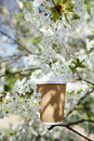 Coffee in paper cup in spring with blossom cherry flower sakura white Royalty Free Stock Photography