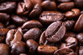 Coffee seed Stock Image