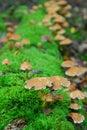 Cogumelos mágicos Fotografia de Stock Royalty Free