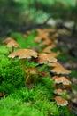 Cogumelos mágicos Foto de Stock Royalty Free