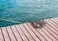 Coiled marine rope on wooden pier and sea Stock Images