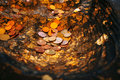 Coin donation in the buddha s footprint Royalty Free Stock Photo