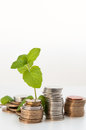 Coin money with green plant growing financial concept coins Stock Photo