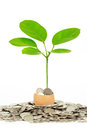 Coins and plant in eggshell Stock Photography