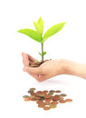 Coins with young plant on human hand. Money growth concept Royalty Free Stock Photo