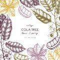 Vector Cola tree vintage sketch. Vintage design with hand drawn with leaves, flowers, fruits and seeds. Botanical frame template.