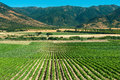 Colchagua Valley Royalty Free Stock Photo