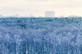 Cold blue dawn over city park in winter moscow Royalty Free Stock Photo