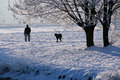 Cold Walk With The Dog Royalty Free Stock Image