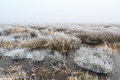 Cold Winter landscape of wetlands with mist and hoar frost Royalty Free Stock Photo