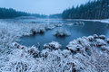 Cold winter morning over wild lake Royalty Free Stock Photo