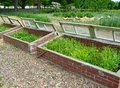 Coldframe view of three open cold frames with mixed vegetables in the garden Royalty Free Stock Image