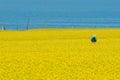 Cole flowers & seas Royalty Free Stock Image