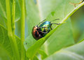 Coleoptera the name derived from the greek words koleos meaning sheath and ptera meaning wings refers to the modified front wings Stock Photos