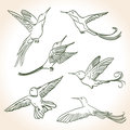 Colibri drawing made in line art style Royalty Free Stock Image