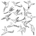 Colibri drawing set made in line art style Stock Images
