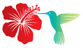 Colibri and flower hummingbird red hibiscus Stock Images