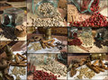 Collage of aromatic spices Stock Image